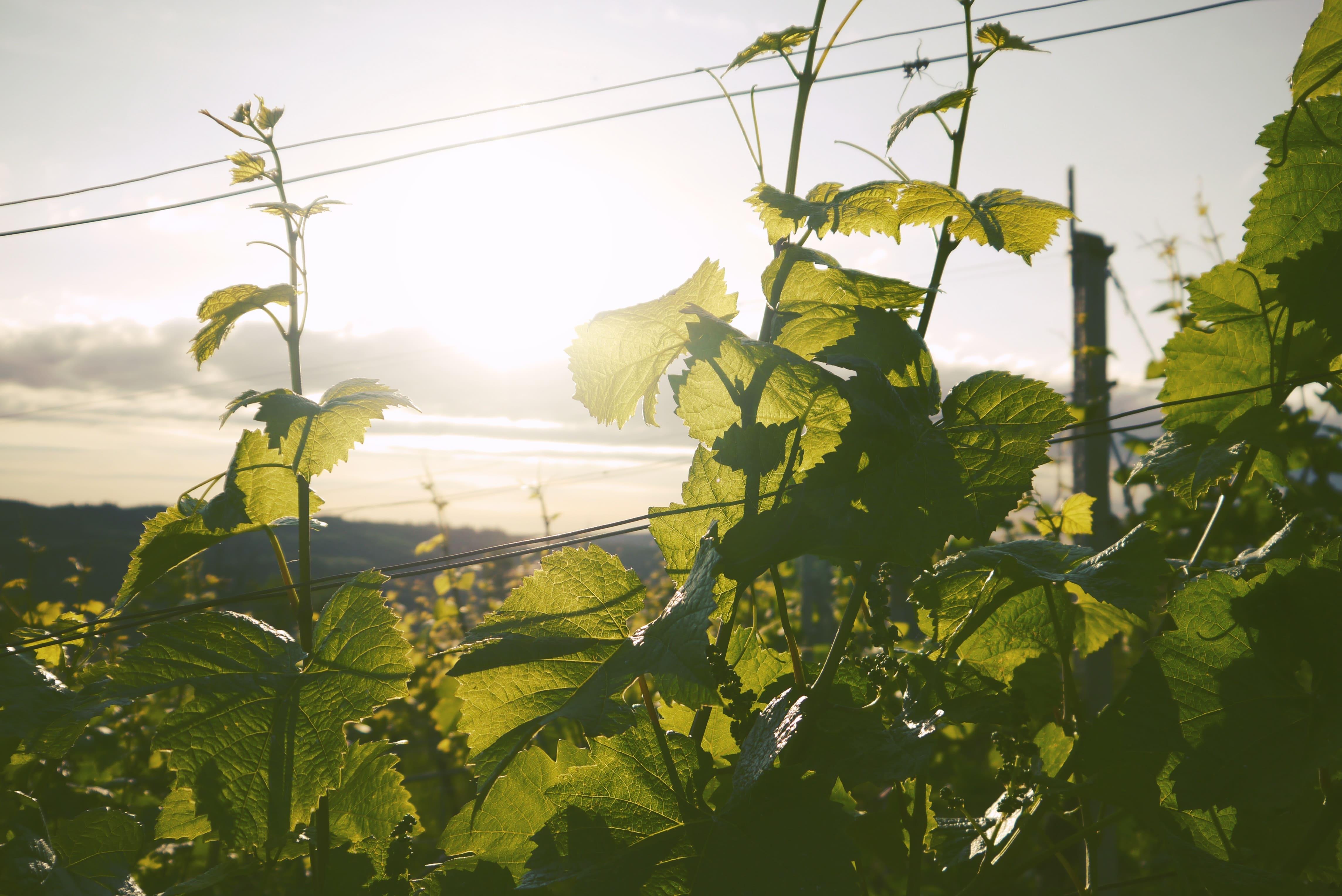 accompagnement à la conversion à l'agriculture biologique