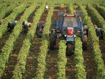 Travaux viticoles Nuits-Saint-Georges